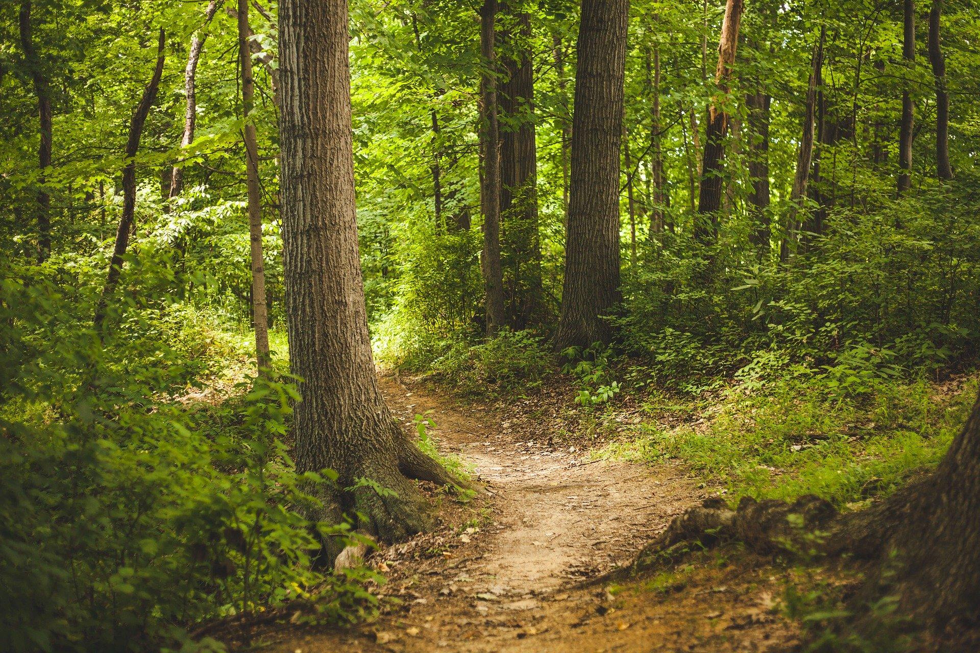 simbiosi magazine nuove antiche foreste