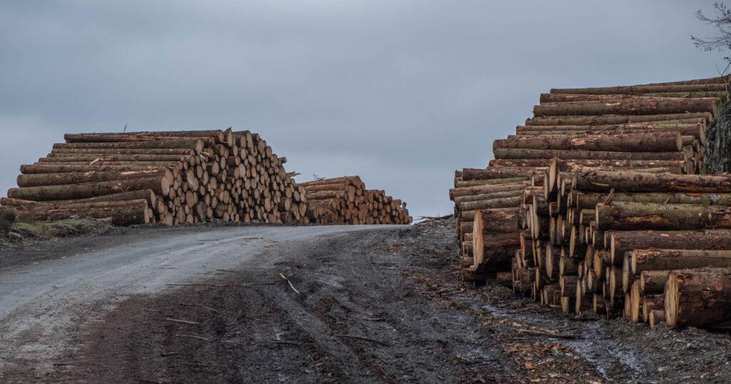 Il saccheggio delle foreste giorgio galleano simbiosi