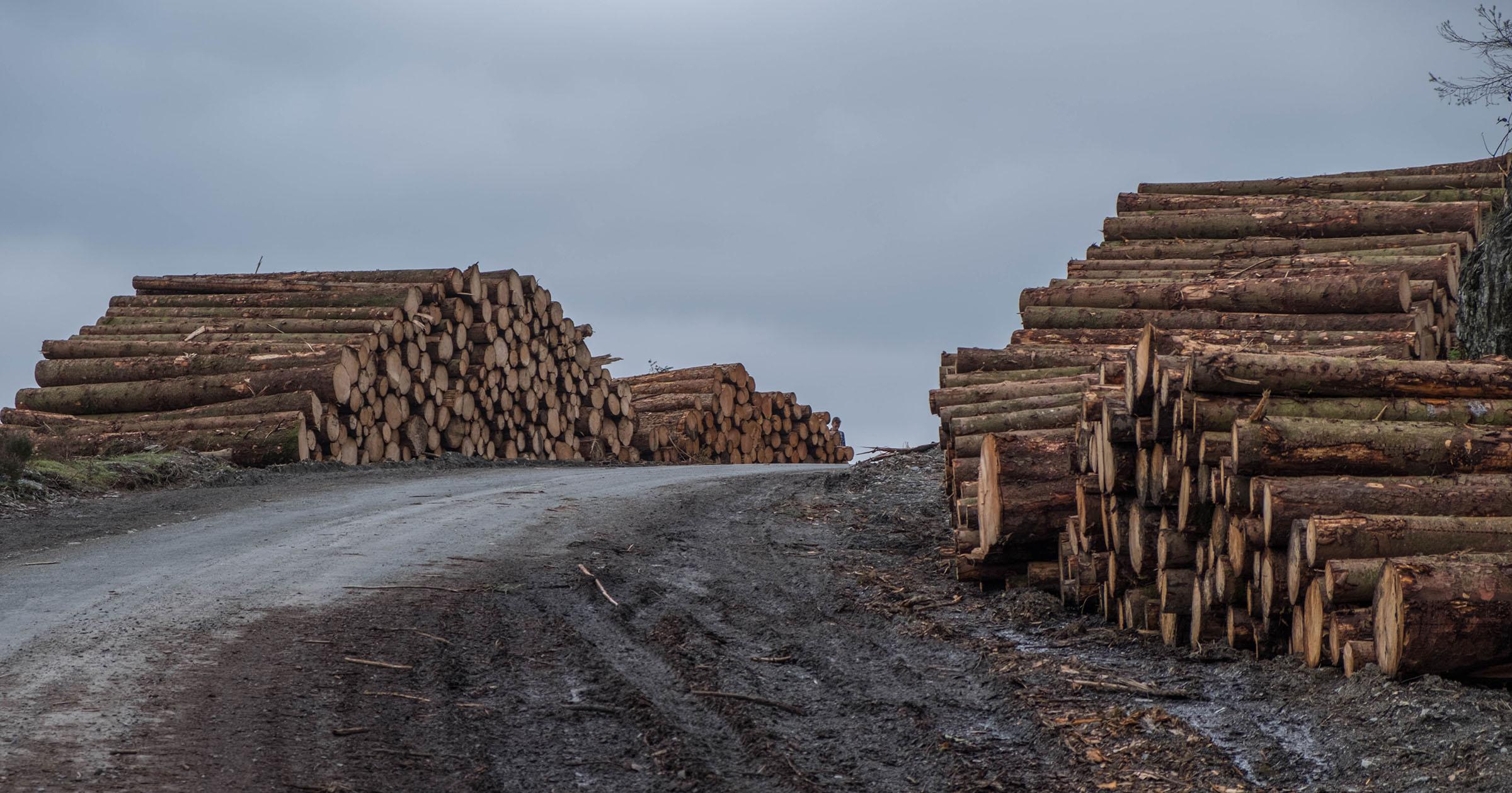 Il saccheggio delle foreste