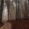 Riserva Naturale Monte San Vicino e Monte Canfaito una mattina di fine ottobre, quando la nebbia dirada i contorni e ti permette di immaginarti ovunque. Foto di Alessandro Picchio