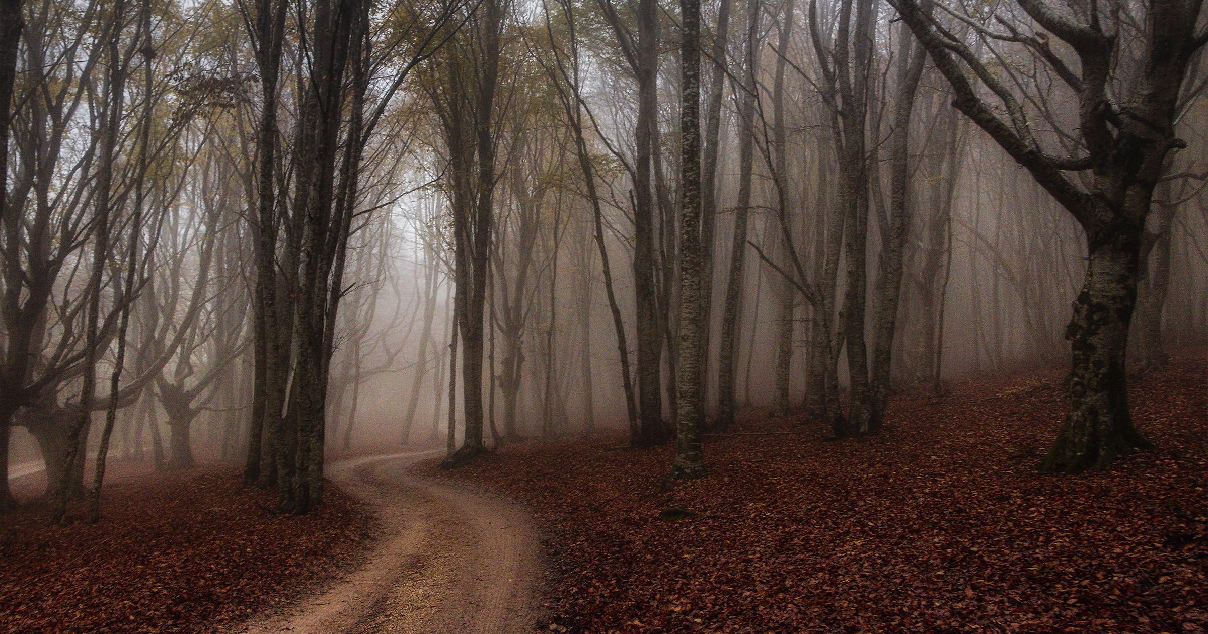 Il paesaggio forestale e  la miseria del ceduo