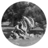 Oleopaticus