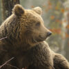 orso davide celli antonio macioce simbiosi magazine
