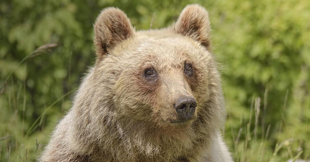 orso marsicano andrea benvenuti simbiosi magazine