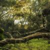Un mare di alberi: la verità dietro i proclami bartolomeo schirone simbiosi magazine