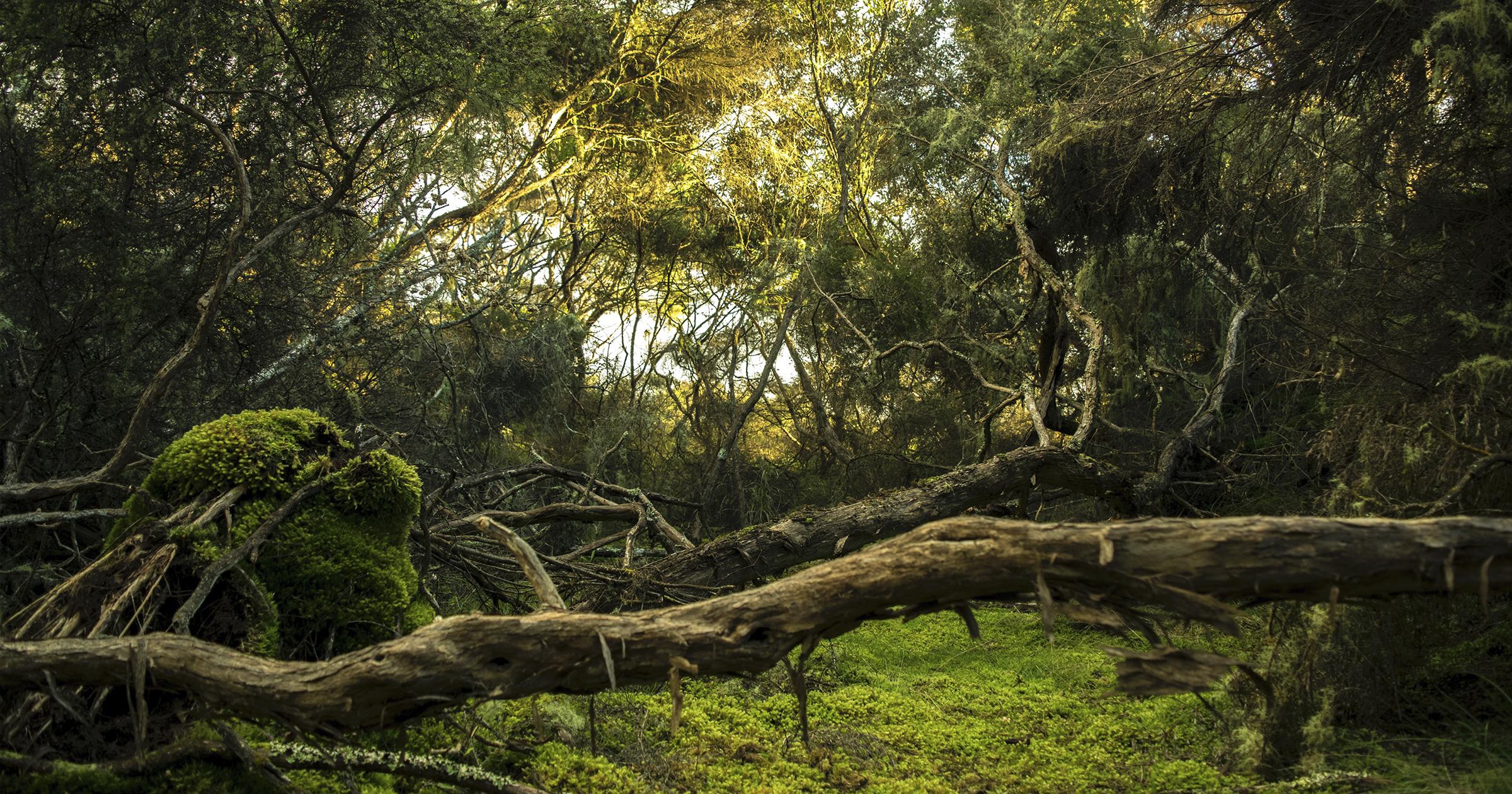 Un mare  di alberi:  la verità dietro i proclami